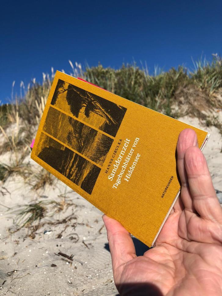 7 Mie Strandlektür Sanddornzeit